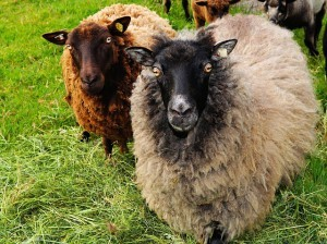 What to do with staffers. OK, so they're not all sheep...